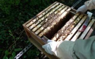 Добавки в сироп для пчел на зиму
