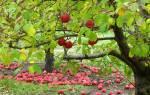 Как подкормить деревья осенью
