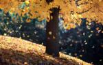 Как опадают листья у листопадных и вечнозеленых растений