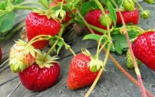 Как подкормить клубнику после плодоношения