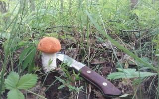 До какого времени можно собирать грибы