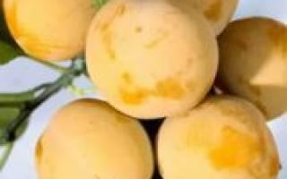 Варенье из белых слив с косточками рецепт