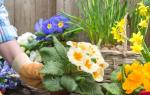 Как правильно на даче сажать цветы