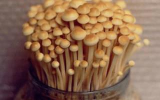 Как вырастить грибы в домашних условиях опята