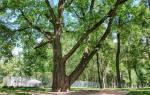 Деревья какие есть названия