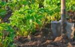Как подготовить землю для клубники