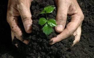 Как насытить почву азотом