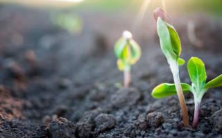 Как землю сделать мягкой