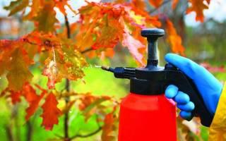 Как обрабатывать садовые деревья осенью