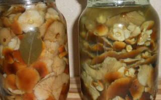 Заготовка опят на зиму рецепты без уксуса
