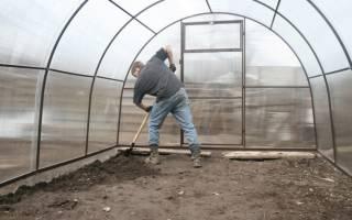 Как обработать теплицу от паутинного клеща осенью