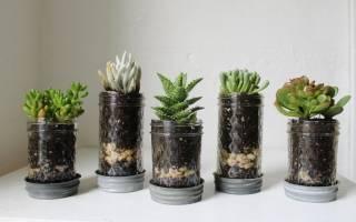Дренаж для комнатных растений что это такое
