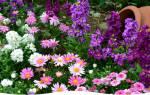 До какого времени осенью можно пересаживать цветы