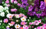 Как правильно расположить на клумбе цветы