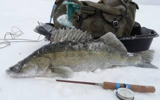 Зимняя ловля на судака на тюльку снасти