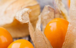 Как вырастить физалис из семян