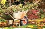 Как подготовить сад к зимовке