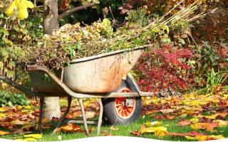 Как подготовить сад осенью к зиме