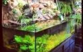 Как из аквариума сделать палюдариум