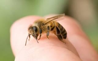 Если пчела укусила в голову что делать