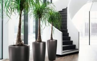 Как вырастить пальму дома