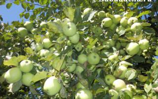 Как приготовить раствор мочевины для опрыскивания плодовых деревьев