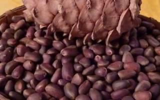 Как быстро очистить кедровые орехи от скорлупы в домашних условиях