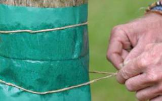 Защита саженцев от грызунов и от заморозков