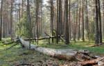 Где можно пилить деревья на дрова