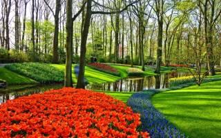 Где сажать тюльпаны в тени или на солнце