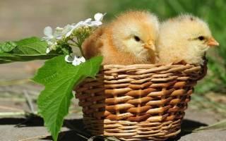 Как вносить куриный помет в почву