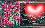 Боярышник для сердца как принимать