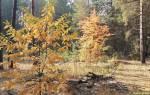 Есть ли в лесу грибы в октябре