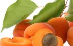 Как вырастить абрикос из косточки на даче