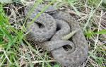 Есть ли в сентябре змеи в лесу