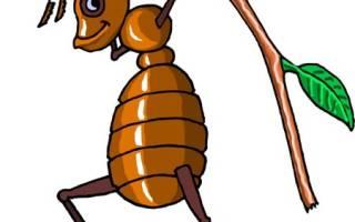 Как избавиться от муравьев в компостной куче