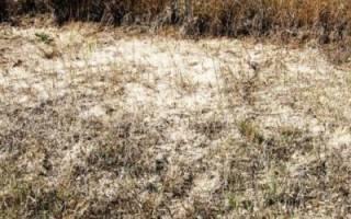 Как избавиться от сорняков на картофельном поле осенью