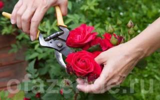 Как правильно розы подрезать
