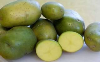 Если позеленела картошка ее можно есть