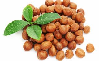 Как из ореха вырастить саженец фундука