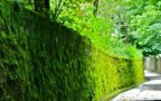 Как вывести кротов на садовом участке