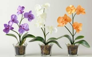 Как пересадить орхидею мини