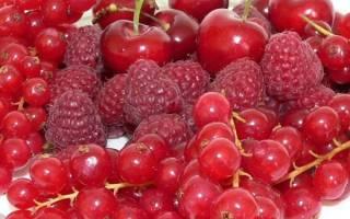 Как называется кустарник с красными ягодами
