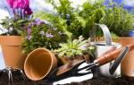 Как правильно пересадить цветок в горшок