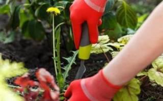 Как избавиться от сорняков и травы на участке