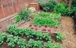 Как картофель выращивать правильно