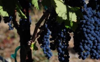Каберне совиньон какое вино