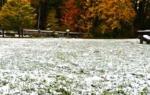 Как оставлять газон на зиму