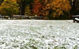 Как подготовить газонную траву к зиме