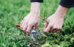 Как избавиться от газона